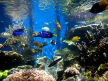 20161027 Google image labeled for reuse Fish_tank_(2)